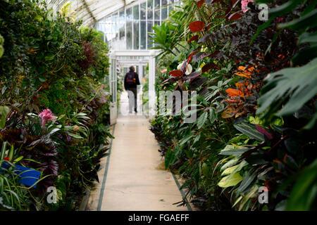 Belfast Botanical Gardens Palm House Glass Tropical Plan Plants Planting Display RM Floral