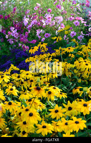 Rudbeckia Indian Summer Heliotrope marine Cosmos sensation mixed mix flower bed display bloom blossom flower yellow - Stock Photo