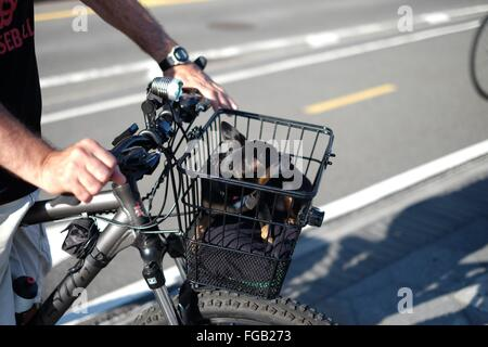 Cropped Image Of Man Riding Bicycle With Dog In Basket - Stock Photo