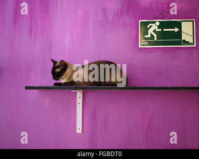 Cat Resting On Plank Against Purple Wall - Stock Photo