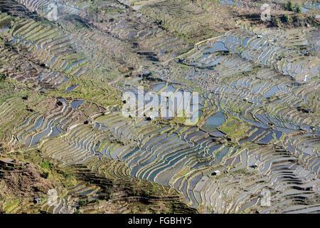 Laohuzui Rice Terraces, late day, Honghe Hani region, Yunnan Province, China - Stock Photo