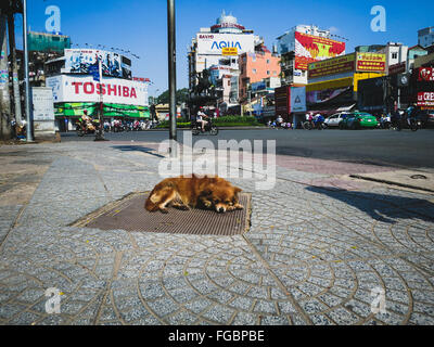 Brown Stray Dog Lying On Drainage Lid In City - Stock Photo