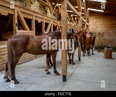 Horses inside a stable in Torres del Paine National Park, Patagonia, Chile, South America - Stock Photo