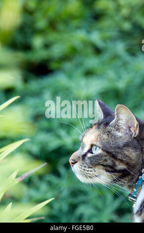 Cat in profile against green background