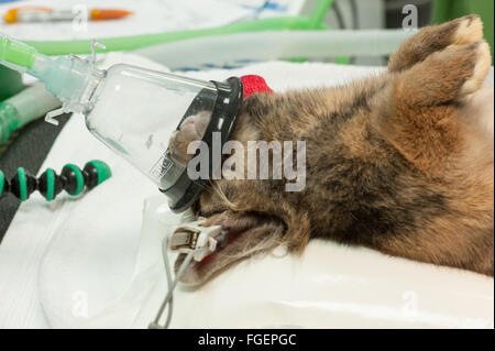 Animal Care during Surgery - Stock Photo