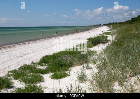 Sandy beach and sand dunes, Skanör Falsterbo, Falsterbo Peninsula, Skåne (Scania), South Sweden, Sweden, Scandinavia, - Stock Photo