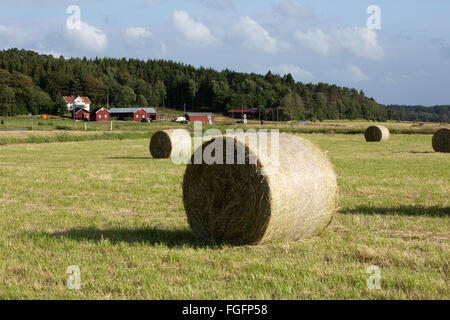 Typical Swedish farm with round hay bales, near Kode, Bohuslän, southwest Sweden, Sweden, Scandinavia, Europe - Stock Photo