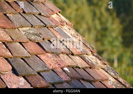 Terracotta roof tiles - Stock Photo
