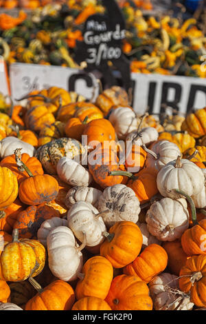 mini-gourds are stacked in a farmers wagon for the Halloween season. various squash and gourds are in the back - Stock Photo