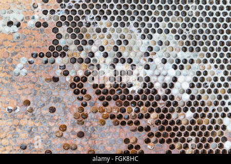beehive frame from dead honeybee colony inside beehive where rain water has penetrated the hive during winter - Stock Photo