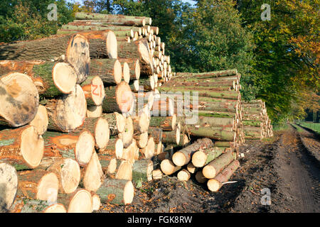 Wooden Logs in a forest - Stock Photo