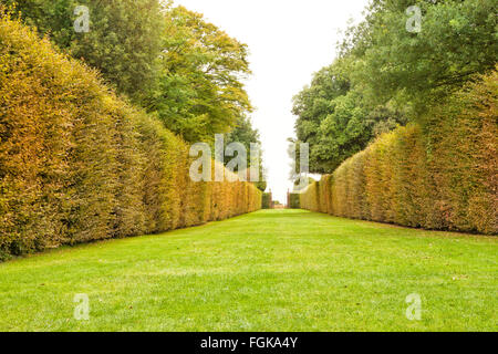 green grass walking pathway between autumn color leaves high hedge, ending with a gate - Stock Photo