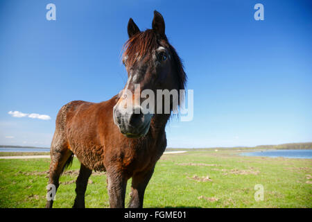 Horse on a meadow - Stock Photo