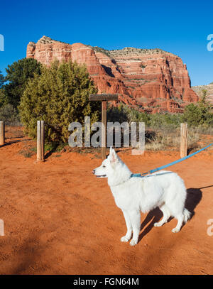 Dog on hike with the Courthouse Butte in distance - Stock Photo