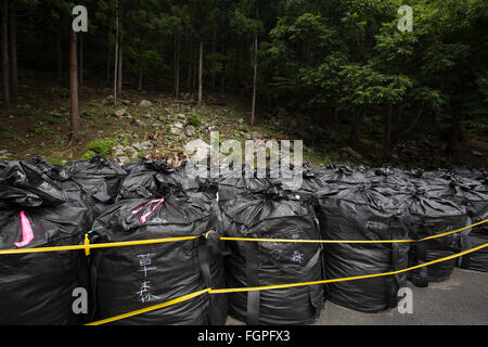 Bags of radioactive waste lay in forest during radioactive decontamination process of Iitate district, Japan. - Stock Photo