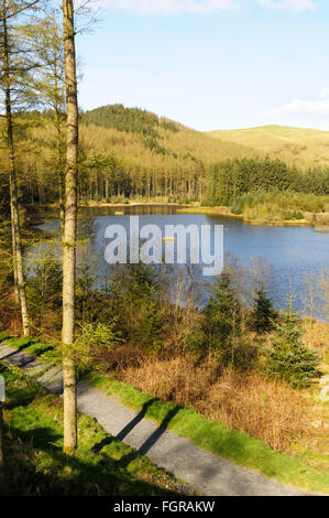 The Bwlch Nant yr Arian centre, Mid Wales is a popular location for seeing red kites which are fed daily - Stock Photo