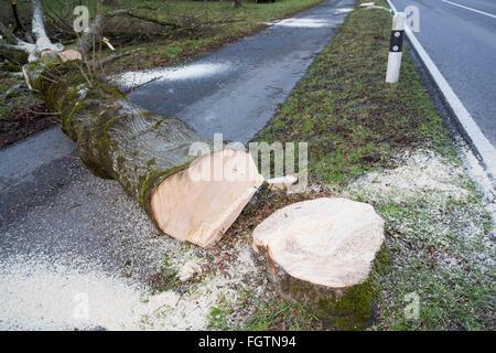 Cutting down a tree, felling a tree along a road, Baum fällen, Baumstamm, tree trunk