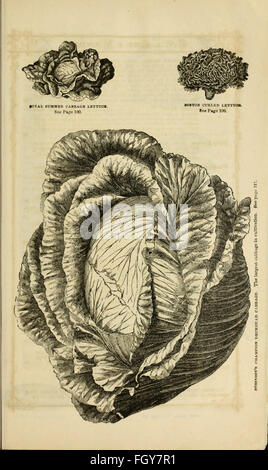 Curtis, Cobb and Washburn's amateur cultivator's guide to the flower and kitchen garden for 1878 (1878) - Stock Photo