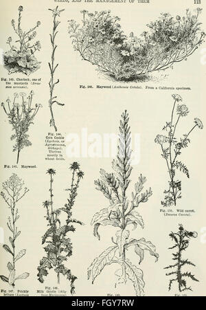 Cyclopedia of farm crops - a popular survey of crops and crop-making methods in the United States and Canada (1922, - Stock Photo