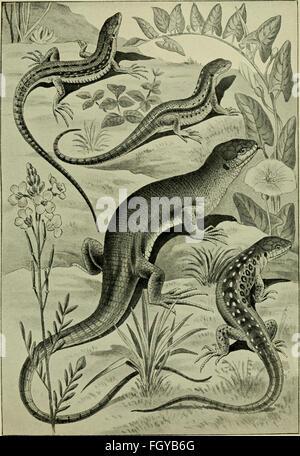 Das Leben unserer heimischen Lurche und Kriech Tiere im Kreislaufe eines Jahres (1905) - Stock Photo