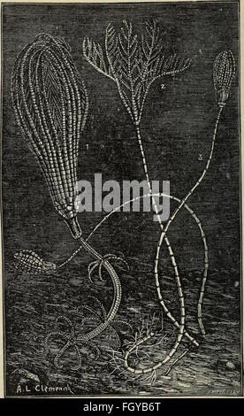 Das meer, seine erforschung und sein leben (1914) - Stock Photo