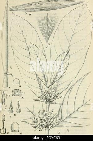 Der Tropenpflanzer; zeitschrift fr tropische landwirtschaft - Stock Photo