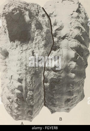 Annals of the South African Museum - Annale van die Suid-Afrikaanse Museum (1980) - Stock Photo
