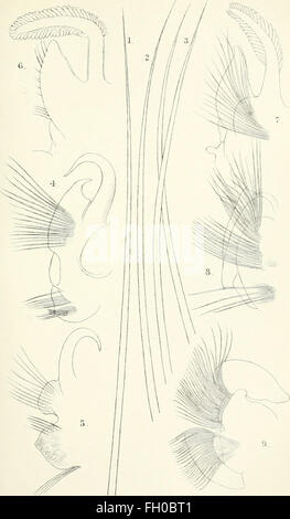 The annals and magazine of natural history - zoology, botany, and geology (1838) - Stock Photo