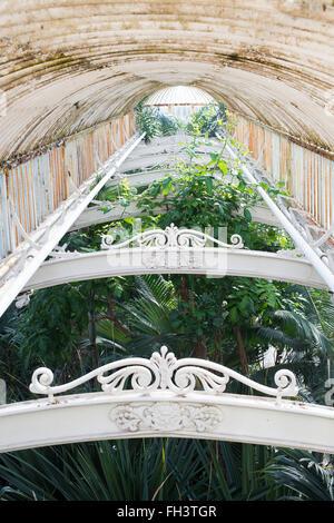 Kew Palm house Interior. Kew Gardens, London, UK - Stock Photo