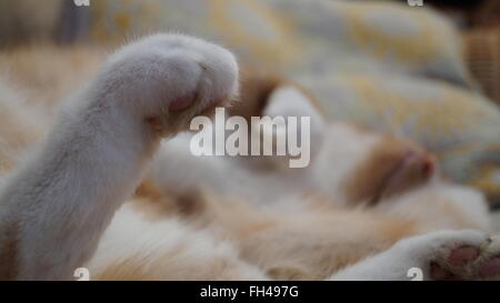 Cat stretched out asleep with paws in the air, focus on back paws in the foreground - Stock Photo