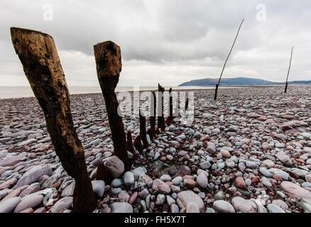 Weathered groynes on the boulder beach at Porlock Wier on the coast of Exmoor National Park UK looking towards Hurlstone - Stock Photo