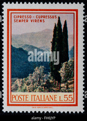 1969 - Italian mint stamp issued to commemorate the Cypress tree Lire 55 - Stock Photo