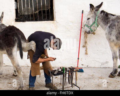 Blacksmith nailing horseshoes typical burro donkey taxi, white village Mijas, Malaga province Costa del Sol. Andalusia - Stock Photo