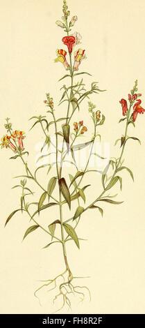 Die mutationstheorie. Versuche und beobachtungen C3BCber die entstehung von arten im pflanzenreich (1901) - Stock Photo