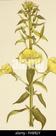 Die mutationstheorie. Versuche und beobachtungen C3BCber die entstehung von arten im pflanzenreich (1903) - Stock Photo