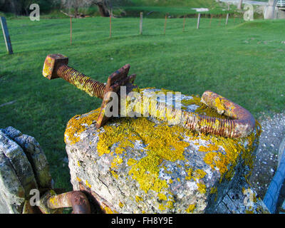 A large rusty moss covered bold on a fencepost. - Stock Photo