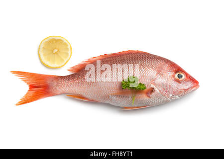 Whole fresh raw red snapper isolated on white background - Stock Photo