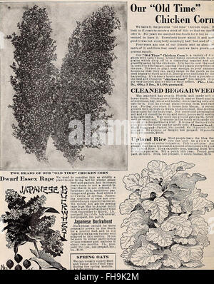 Hastings' seeds - spring 1912 catalogue (1912) - Stock Photo