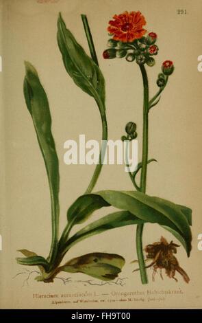 Atlas der Alpenflora - Stock Photo