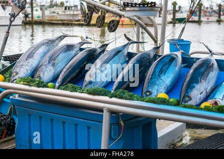 Tuna market in fishing port katsuura nachikatsuura for Fish market richmond va