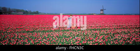 Panoramic image of mother and daughters in field of red tulips near Alkmaar with windmill in Holland - Stock Photo