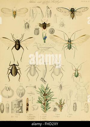 Die forst-insecten - oder Abbildung und beschreibung der in den wC3A4ldern Preussens und der nachbarstaaten als - Stock Photo