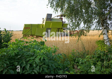 Polish farmers harvesting grain in field with a modern combine harvester. Rzeczyca Central Poland - Stock Photo