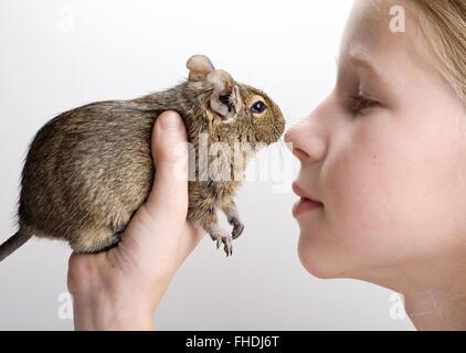 little girl with degu hamster in hands - Stock Photo