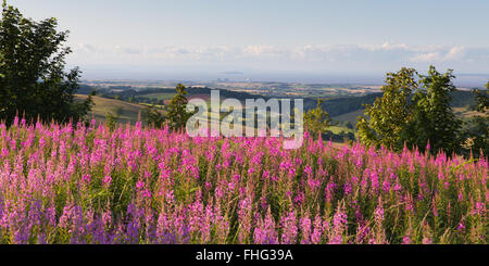 Quantock Hills Somerset England UK countryside views towards Hinkley Point Nuclear Power station and Bristol Channel - Stock Photo