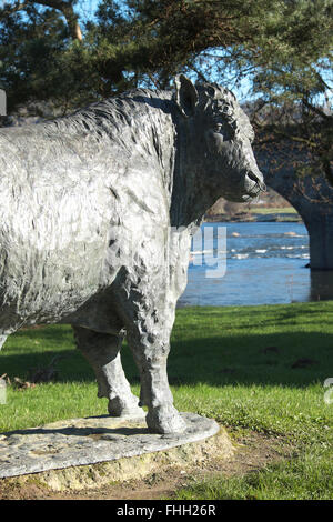 Builth Wells, Powys, Wales - Life size Welsh Black bull bronze statue stands beside the River Wye by sculptor Gavin - Stock Photo