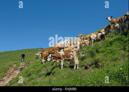 Austria. Kitzbüheler Alps. Kitzbühel. hikers. Europe - Stock Photo
