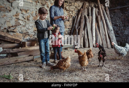 Woman and her children feeding hens with green grapes in a farm barnyard - Stock Photo
