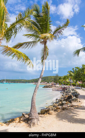 Palm trees on the shore at Dickenson Bay beach in north Antigua with blue sky and turquoise sea on a sunny day - Stock Photo