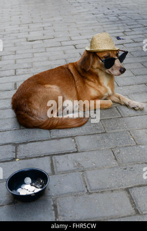 A poor dog alms at Havana on Cuba - Stock Photo